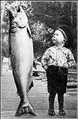 chinook_salmon.jpg